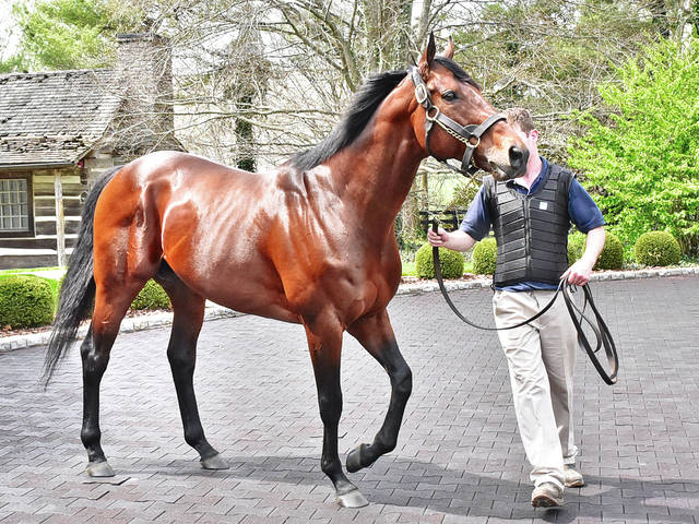 Ashford home to past (and perhaps future) Triple Crown