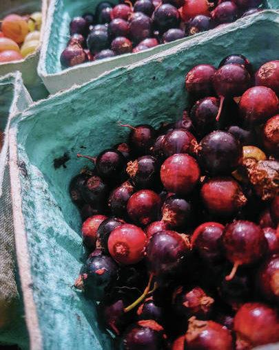 Black Currants: Small sweet/tart delights