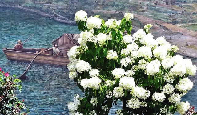 Floral appreciation