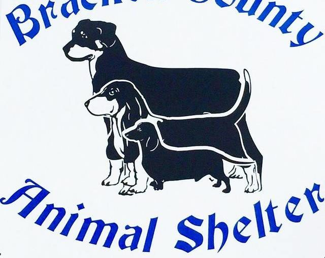 Animal Shelter community day to be held Saturday