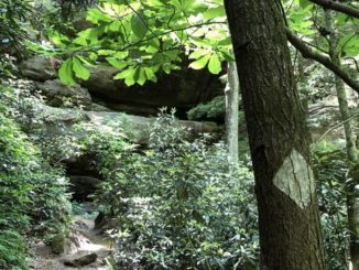 A white diamond blaze marks the path for hikers on the route to Gray's Arch in Red River Gorge.