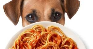 Animal Shelter to hold fundraising event
